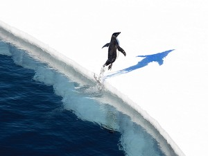 Adelie penguins in the Ross Sea.© John Weller